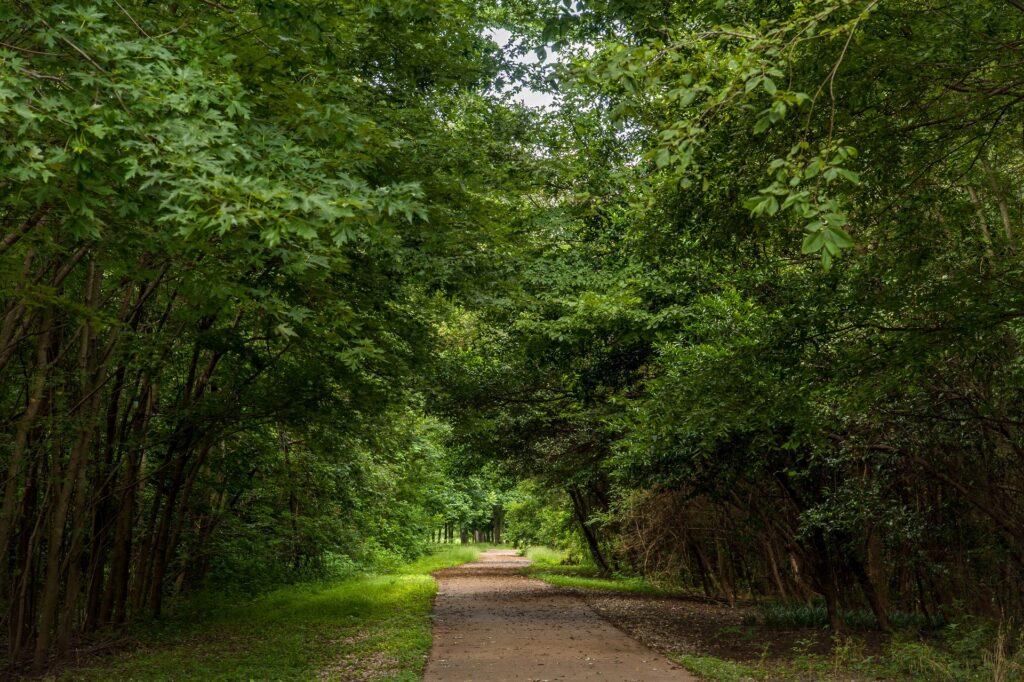 Yazoo River Trail